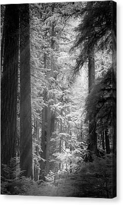 Emerging Light Canvas Print by Jon Glaser