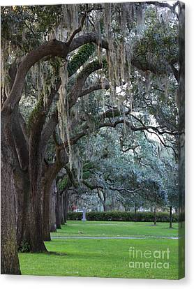 Emmet Park In Savannah Canvas Print by Carol Groenen