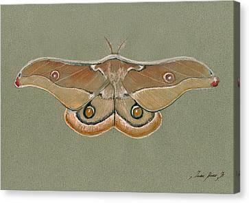 Emperor Gum Moth Canvas Print