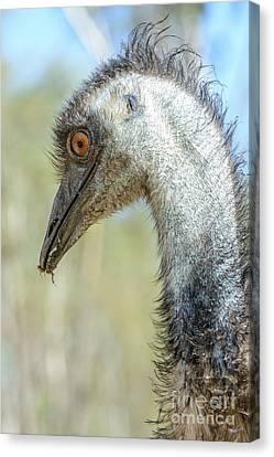 Emu 3 Canvas Print