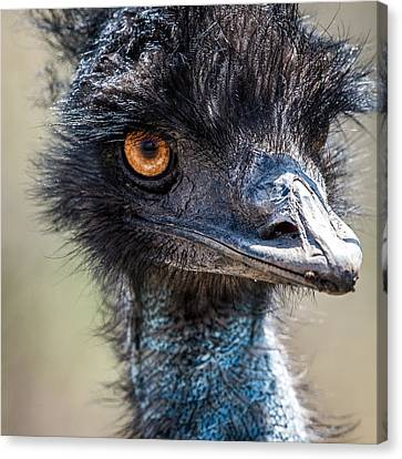 Emu Eyes Canvas Print by Paul Freidlund