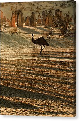 Emu Terrain Canvas Print by Heather Thorning