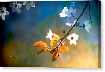 Canvas Print featuring the photograph En Sintonia by Alfonso Garcia