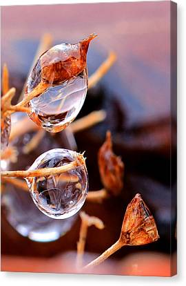 Encapsulated By Ice Canvas Print by Christopher McKenzie