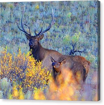Enchanted Circle Elk Red River New Mexico Canvas Print by Charles Frieda