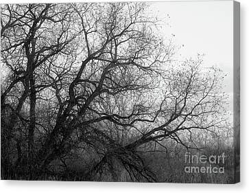 Canvas Print featuring the photograph Enchanted Forest by Ana V Ramirez