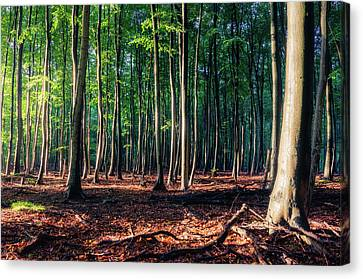 Canvas Print featuring the photograph Enchanted Forest by Dmytro Korol