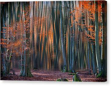 Enchanted Forest Canvas Print by Em-photographies