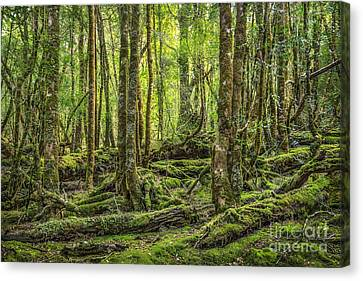 Enchanted Forest Canvas Print by Evelina Kremsdorf