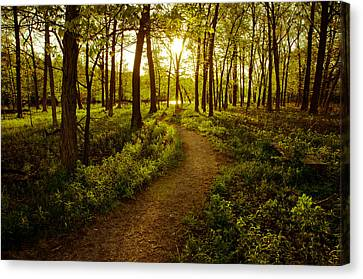 Enchanted Forest Canvas Print by Jason Naudi Photography