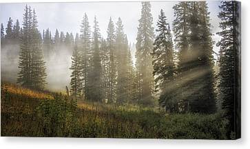 Enchanted Forest Of Kebler Pass  Canvas Print by Thomas Schoeller