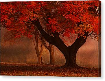 Enchanted Forest Canvas Print by Ken Smith