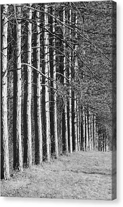 Clearing Canvas Print - Enchanted Forest by Luke Moore