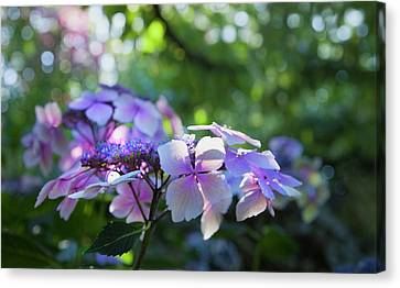 Canvas Print featuring the photograph Enchanted Hydrangea by Theresa Tahara