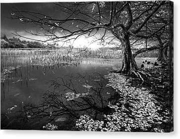 Enchanted In Black And White Canvas Print by Debra and Dave Vanderlaan