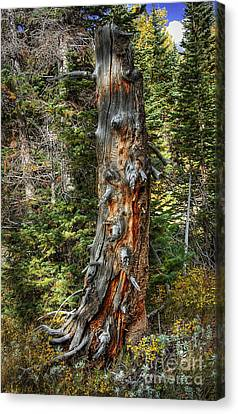 Enchanted Tree Canvas Print by Pete Hellmann