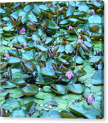 Canvas Print featuring the photograph Painted Water Lilies by Theresa Tahara
