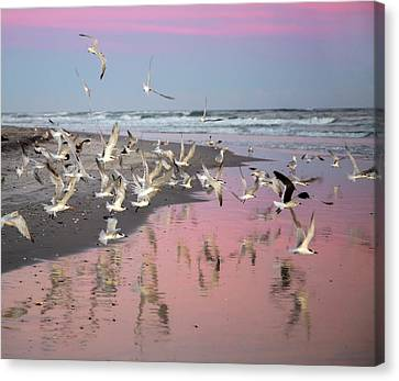 Topsail Island Canvas Print - Enchanting Evening by Betsy Knapp