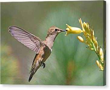 Canon 7d Canvas Print - Enchanting Moment by Donna Kennedy