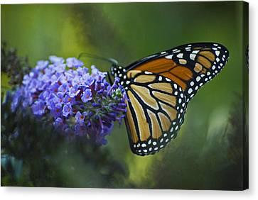 Canvas Print featuring the photograph Enchanting Monarch by Elsa Marie Santoro
