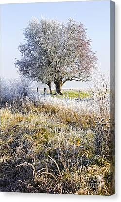 Enchanting Snow Covered Landscape Canvas Print by Jorgo Photography - Wall Art Gallery