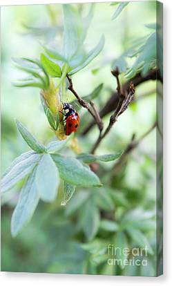 Encyclopedia Of Spring Image 31 Canvas Print