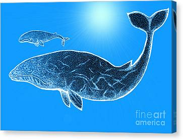 Endangered Gray Whales Canvas Print by Nick Gustafson