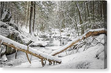 Enders State Forest Canvas Print by Bill Wakeley