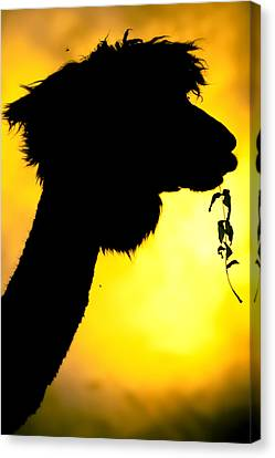 Endless Alpaca Canvas Print by TC Morgan