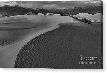 Endless Dunes Black And White Canvas Print by Adam Jewell