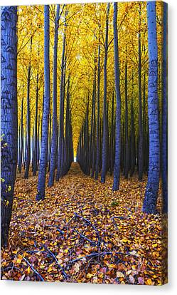 Endless Forest Canvas Print by Vishwanath Bhat