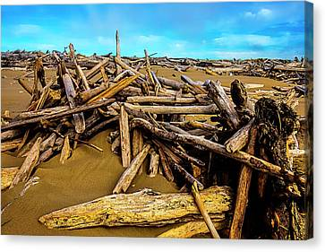 Endless Piles Of Driftwood Canvas Print by Garry Gay