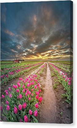 Canvas Print featuring the photograph Endless Tulip Field by William Lee