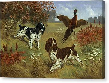 Energetic English Springer Spaniels Canvas Print by Walter A. Weber