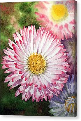 English Daisies  Canvas Print