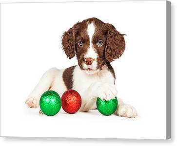 English Springer Spaniel Puppy With Christmas Baubles Canvas Print