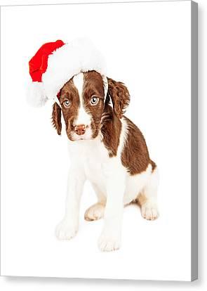 English Springer Spaniel Santa Puppy Canvas Print by Susan Schmitz