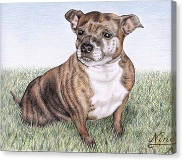 English Staffordshire Terrier Canvas Print by Nicole Zeug