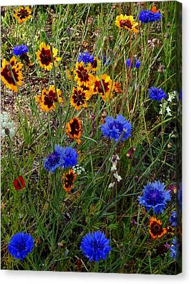 English Cottage Garden Flowers 4 Canvas Print by Dorothy Berry-Lound