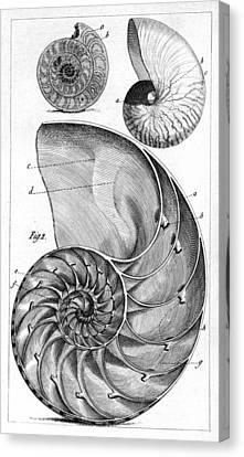 Engraving Of A Nautilus And An Ammonite Canvas Print by Middle Temple Library
