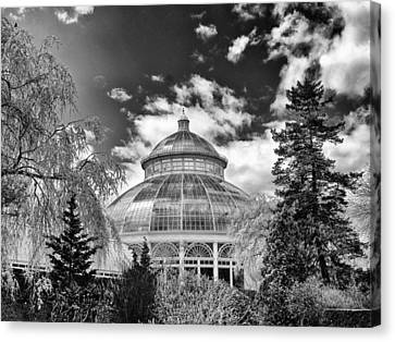 Cherry Tree Canvas Print - Enid J, Haupt Conservatory by Jessica Jenney