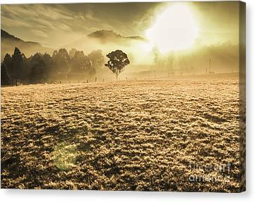 Enigmatic Grassland Canvas Print