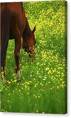 Canvas Print featuring the photograph Enjoying The Wildflowers by Karol Livote