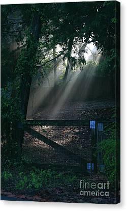 Canvas Print featuring the photograph Enlighten by Lori Mellen-Pagliaro
