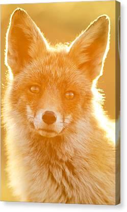 Enlightened Fox Canvas Print by Roeselien Raimond
