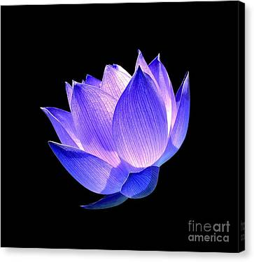 Enlightened Canvas Print by Jacky Gerritsen