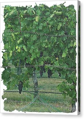 Canvas Print featuring the digital art Enmeshed Grapevine by Ellen Barron O'Reilly