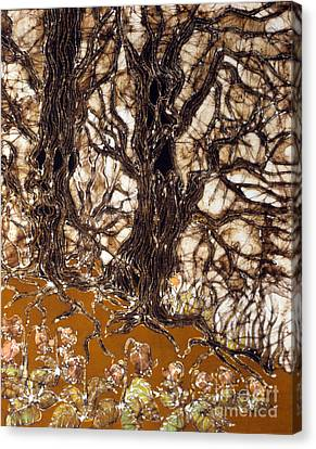 Ent Tree Forest Canvas Print by Carol Law Conklin