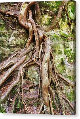 Entwined Canvas Print by Anna Villarreal Garbis