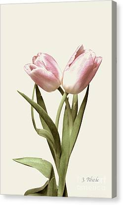 Entwined Tulips Canvas Print by Jeannie Rhode